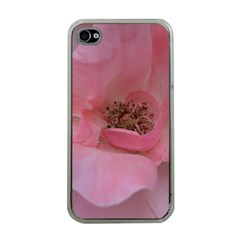 Pink Rose Apple Iphone 4 Case (clear) by timelessartoncanvas
