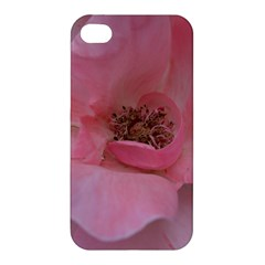 Pink Rose Apple Iphone 4/4s Premium Hardshell Case by timelessartoncanvas