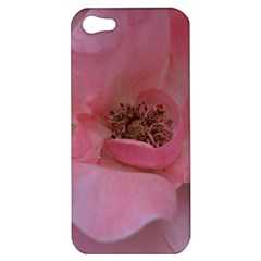 Pink Rose Apple Iphone 5 Hardshell Case by timelessartoncanvas