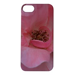 Pink Rose Apple Iphone 5s Hardshell Case by timelessartoncanvas