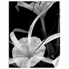 Exotic Black And White Flowers Canvas 12  X 16   by timelessartoncanvas