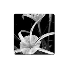 Exotic Black And White Flowers Square Magnet by timelessartoncanvas