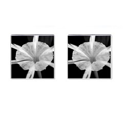 Exotic Black And White Flower 2 Cufflinks (square) by timelessartoncanvas