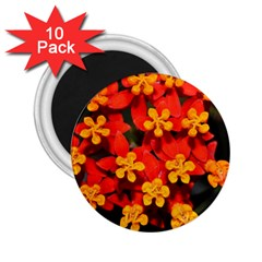 Orange And Red Weed 2 25  Magnets (10 Pack)  by timelessartoncanvas