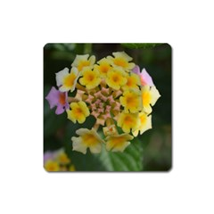 Colorful Flowers Square Magnet by timelessartoncanvas