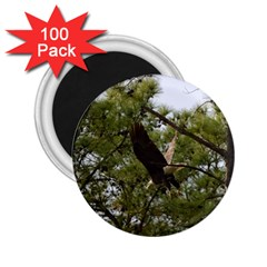 Bald Eagle 2 2 25  Magnets (100 Pack)