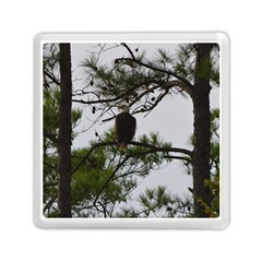 Bald Eagle 3 Memory Card Reader (square)  by timelessartoncanvas