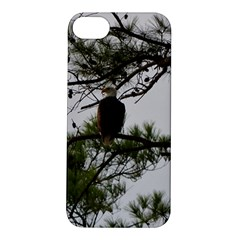 Bald Eagle 3 Apple Iphone 5s Hardshell Case by timelessartoncanvas