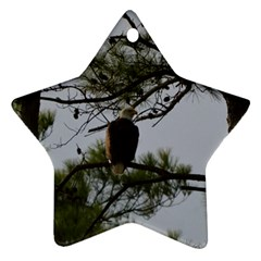 Bald Eagle 4 Star Ornament (two Sides)  by timelessartoncanvas