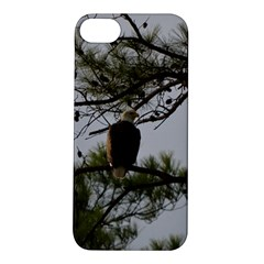 Bald Eagle 4 Apple Iphone 5s Hardshell Case