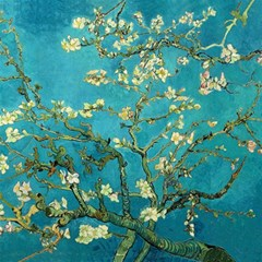 Blossoming Almond Tree Canvas 20  X 20   by MasterpiecesOfArt