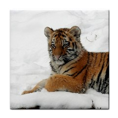 Tiger 2015 0101 Tile Coasters by JAMFoto
