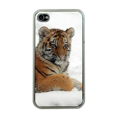 Tiger 2015 0102 Apple Iphone 4 Case (clear) by JAMFoto