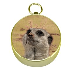 Meerkat 2 Gold Compasses by ImpressiveMoments