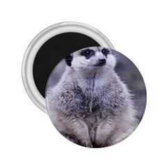 Adorable Meerkat 03 2 25  Magnets by ImpressiveMoments