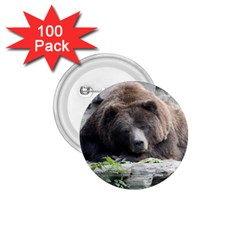 Tired Bear 1 75  Buttons (100 Pack)  by MoreColorsinLife