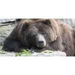 Tired Bear Best Friends 3D Greeting Card (8x4)  Front