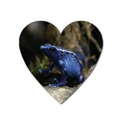 Blue Poison Arrow Frog Heart Magnet by stineshop