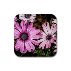 Beautiful Colourful African Daisies  Rubber Coaster (square)  by OZMedia