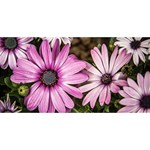 Beautiful Colourful African Daisies  HUGS 3D Greeting Card (8x4)  Front