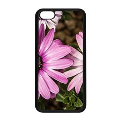 Beautiful Colourful African Daisies  Apple Iphone 5c Seamless Case (black) by OZMedia