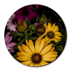 Beautiful Colourful African Daisies  Round Mousepads by OZMedia