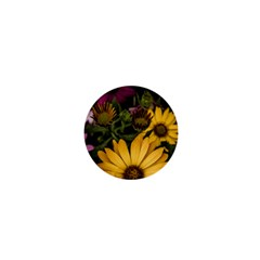 Beautiful Colourful African Daisies  1  Mini Buttons by OZMedia