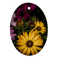Beautiful Colourful African Daisies  Ornament (oval)  by OZMedia