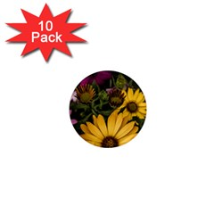 Beautiful Colourful African Daisies  1  Mini Magnet (10 Pack)  by OZMedia