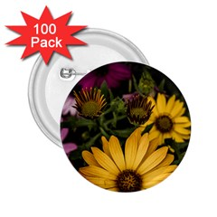 Beautiful Colourful African Daisies  2 25  Buttons (100 Pack)  by OZMedia