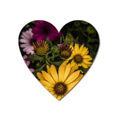 Beautiful Colourful African Daisies  Heart Magnet by OZMedia