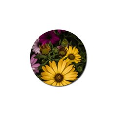 Beautiful Colourful African Daisies  Golf Ball Marker by OZMedia