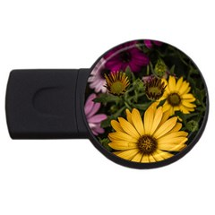 Beautiful Colourful African Daisies  Usb Flash Drive Round (4 Gb)  by OZMedia