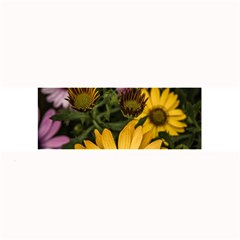 Beautiful Colourful African Daisies  Large Bar Mats by OZMedia