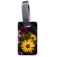 Beautiful Colourful African Daisies  Luggage Tags (two Sides) by OZMedia