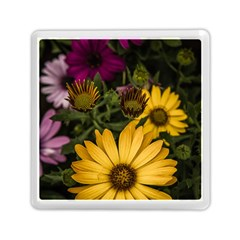 Beautiful Colourful African Daisies  Memory Card Reader (square)  by OZMedia