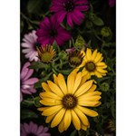 Beautiful Colourful African Daisies  Circle Bottom 3D Greeting Card (7x5)  Inside