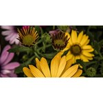 Beautiful Colourful African Daisies  Laugh Live Love 3D Greeting Card (8x4)  Back