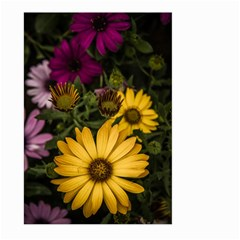 Beautiful Colourful African Daisies  Large Garden Flag (two Sides) by OZMedia