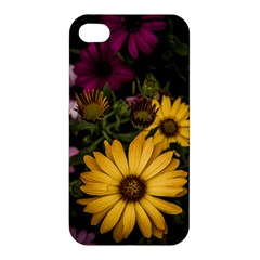 Beautiful Colourful African Daisies  Apple Iphone 4/4s Premium Hardshell Case by OZMedia