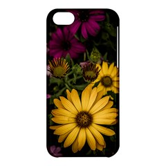Beautiful Colourful African Daisies  Apple Iphone 5c Hardshell Case by OZMedia