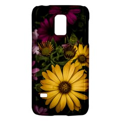 Beautiful Colourful African Daisies  Galaxy S5 Mini by OZMedia
