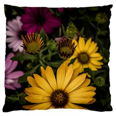 Beautiful Colourful African Daisies  Large Flano Cushion Cases (one Side)  by OZMedia