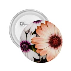 Beautiful Colourful African Daisies 2 25  Buttons