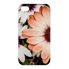 Beautiful Colourful African Daisies Apple Iphone 4/4s Premium Hardshell Case