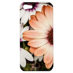 Beautiful Colourful African Daisies Apple Iphone 5 Hardshell Case by OZMedia