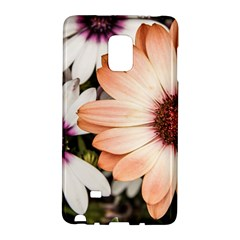 Beautiful Colourful African Daisies Galaxy Note Edge by OZMedia