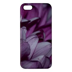 Purple! Iphone 5s Premium Hardshell Case by timelessartoncanvas