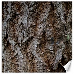 Douglas Fir Bark Canvas 12  X 12   by trendistuff