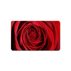 Beautifully Red Magnet (name Card) by timelessartoncanvas